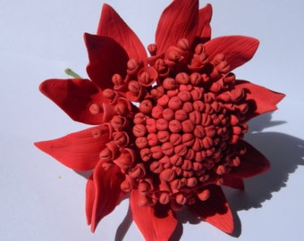 1 edible AUSTRALIAN WARATAH SUGAR flower cake cupcake toppers decorations party wedding anniversary birthday