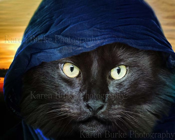 Mysitcal Black Cat Black Cat Funny Cat Maine Coon Cat Etsy