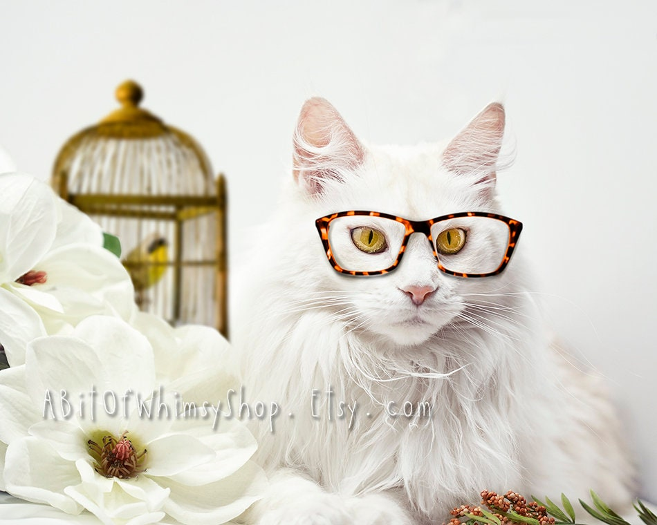 b0214048ff27 White Cat Photography Print Maine Coon Animals in Glasses | Etsy