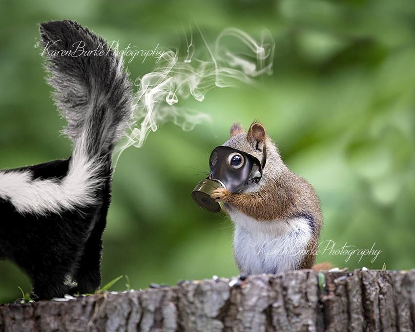 Lustige Eichhörnchen drucken wunderliche Animal Art Skunk   Etsy