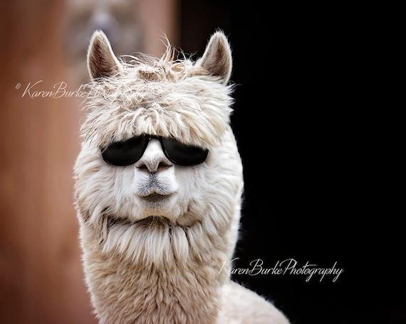 Alpaka-Fotografie lustige Alpaka drucken lustige Tiere | Etsy