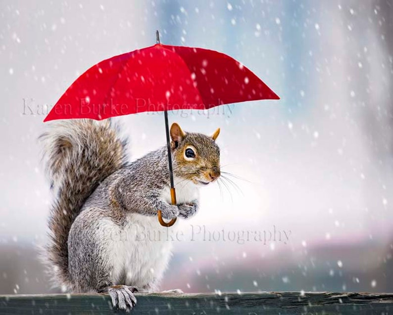 Squirrel Print Whimsical Squirrel Funny Animal Art Red  Etsy-5422