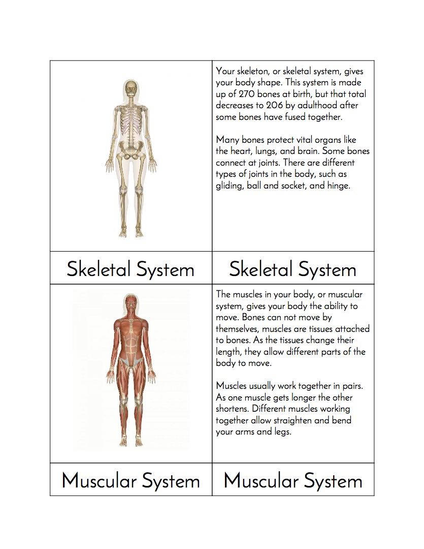 Systems Of The Body Montessori Threefour Part Cards Etsy