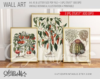 Vintage Printable Wallart - Botanical Illustration - Tomato - MeloCactus - Chili Pepper - Home decor Botanical