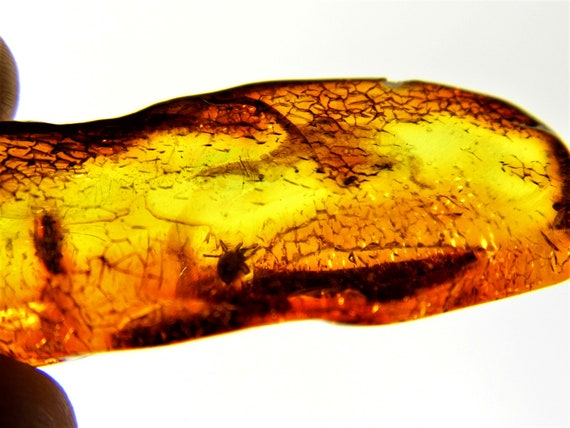 Baltic Amber with insect. Natural genuine stone bead with fossil inclusion cognac / honey / transparent authentic 5.7 gr. FREE SHIPPING 2212