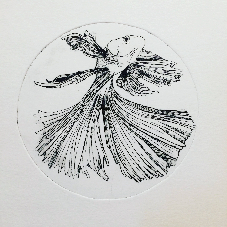 Beta-Fisch Fisch Beta-Fisch-Kunst Beta-Fisch Druck