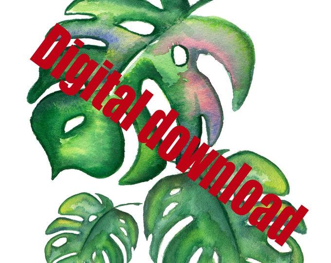 DIGITAL DOWNLOAD Split Leaf Illustration