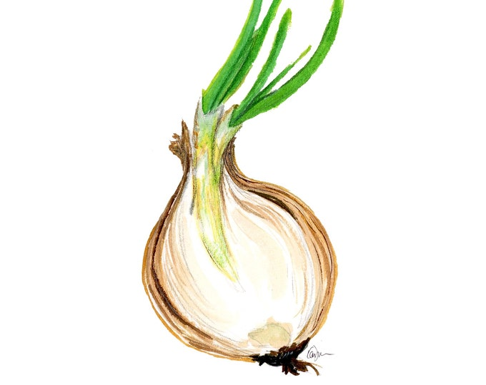 Onion Watercolor Painting, Food Illustration, Aguacate Drawing, Spanish Language, Fruit Art, For the Kitchen, Wall Art, Home Decoration