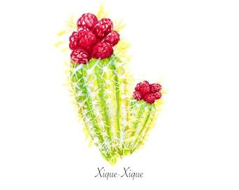 Xique-Xique Cactus