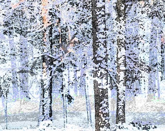 Snow Covered Winter Trees, Black and White with a little color , Original Photograph, Poster Like, Peaceful
