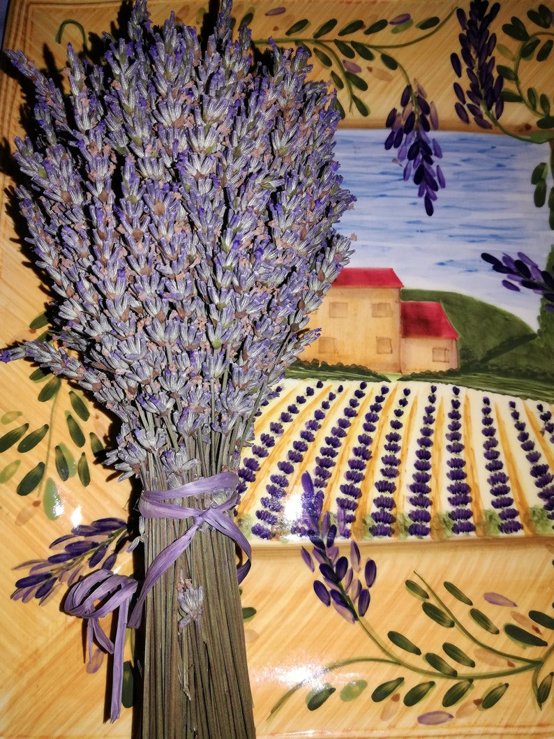 Lavender Bouquets  Grosso Dried lavender  Freshly Picked image 0