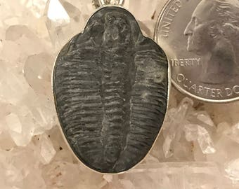 Trilobite Fossil and Black Pendant Necklace