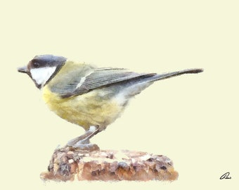 A Great Tit (Scientific name: Parus major)