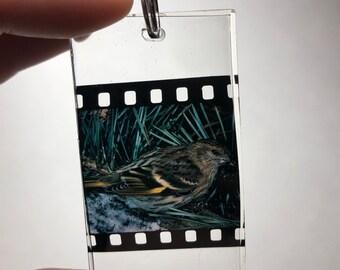 Pine Siskin Film Resin Keychain f74950e70