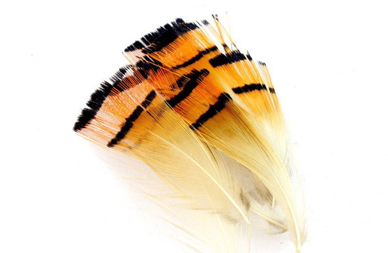10 GOLDEN PHEASANT TAIL FEATHERS 7 TO 9 INCHES FOR FLY TYING