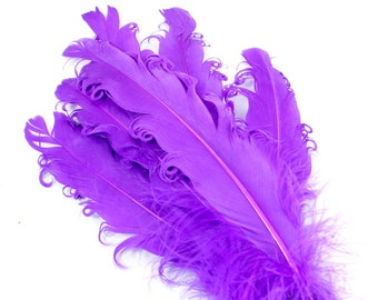 Purple Curled Goose Feathers. (5) Long Dark Colored Bird Quills with Coiled Edges.