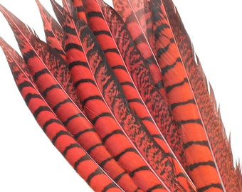 10-12 Inch Red Lady Amherst Feathers. Red Bird Feathers. Red Pheasant Feathers. Red Pheasant Tail Feathers. Colored Bird Tails. Mask Feather