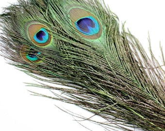 Natural Peacock Feathers.  Long Dark Green Peacock Bird Feathers. Green Feathers for Hats. Peacock Feathers for Wedding Decorations