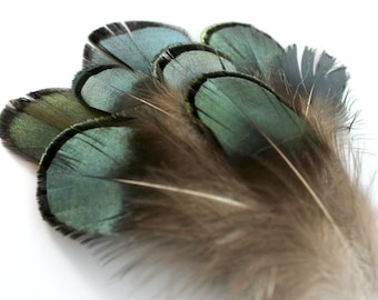 2-4 Inch Green Pheasant Feathers (10) Green Feathers. Green Bird Feathers for Fascinators. Green Mask Feathers for Crafts. Short Feathers