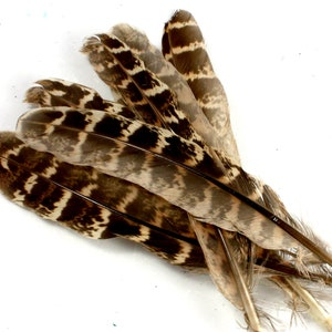 Golden Pheasant Tippet Feathers natural 10pk craft feathers fly tying feathers