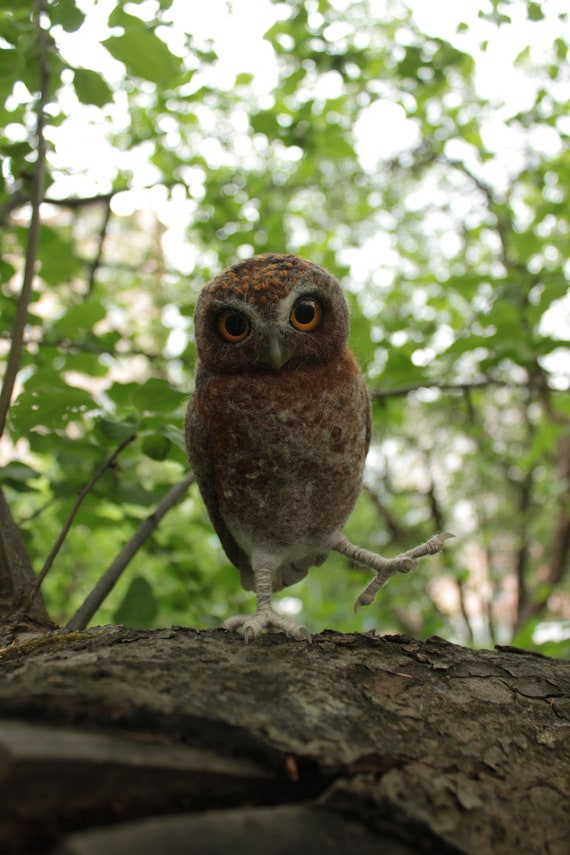 Elf owl, small owl, owlet, owl, needle felted owl, felted owl, faux taxidermy, cute owl, birdy, bird, bird lover, forest creature, animal