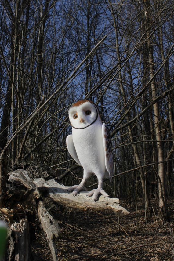 Made to order (this very item is alredy SOLD) Young barn owl, Faux Taxidermy, Soft sculpture, Needle felted, Forest bird, Felted wool