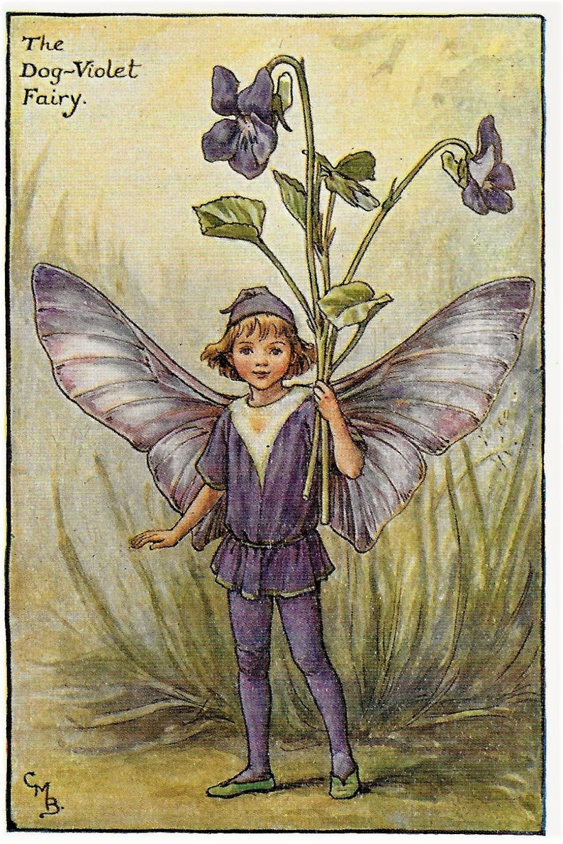 flower fairies dog violet garden boy vintage 1920 matted picture purple  pansy fairy w- butterfly wings by cicely marybarker print