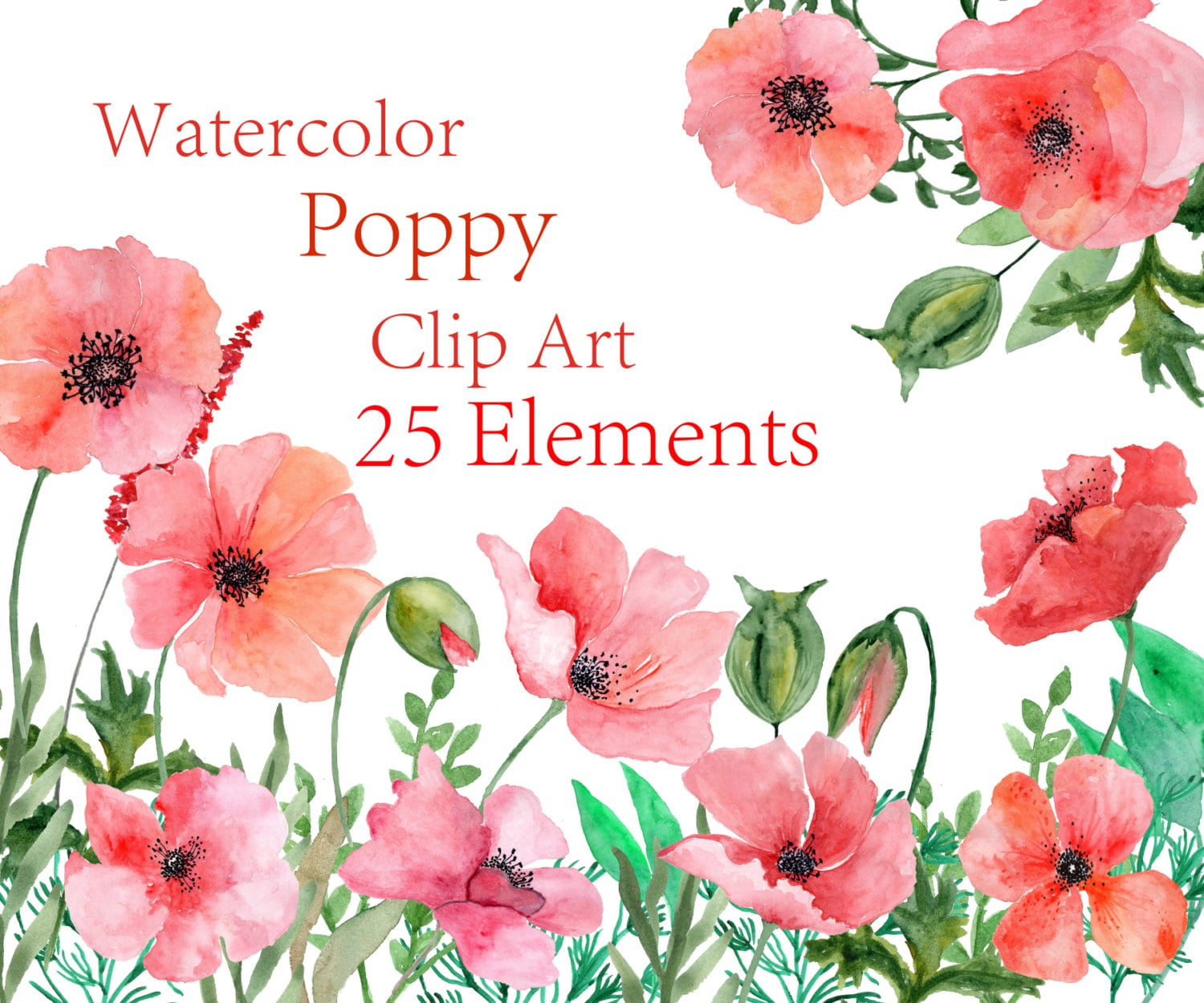 Watercolor Poppy Flowers Clipart Watercolor Floral Clipart Red Etsy
