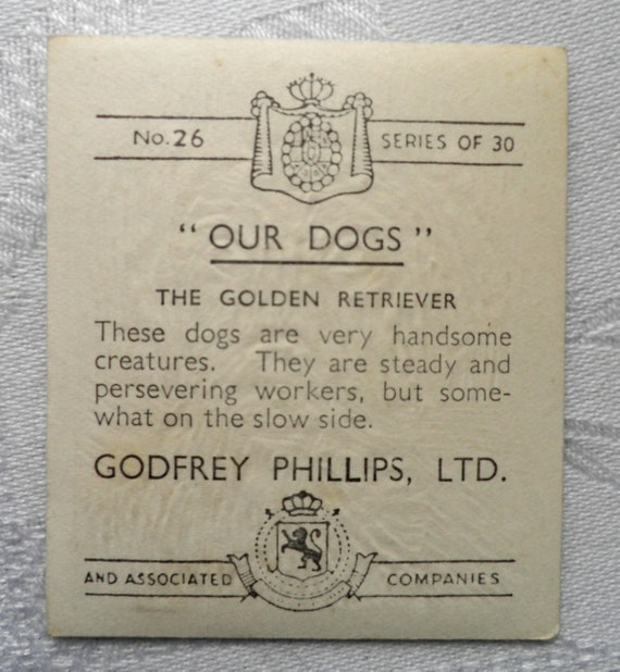 "26 The Golden Retriever No Godfrey Phillips ""Our Dogs"" 1939"