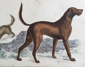 19th Century Oliver Goldsmith DOG Engraving
