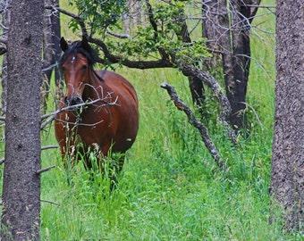 Peek-A-Boo Horse, Fine art photograph, photography print, lamdscape photography, animal photo, whimsy photography