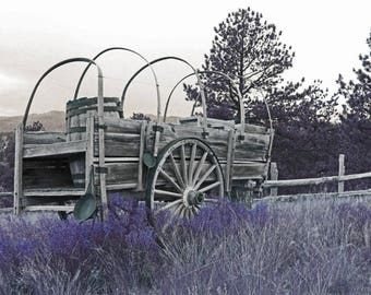 Framed Vintage wagon photograph, black and white photo, outdoors, purple flowers, cloudy skys, forest and wooden fence, framed photo