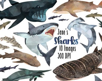 Watercolor Sharks Clipart - Shark Species Download - Instant Download - Great White - Basking - Hammerhead
