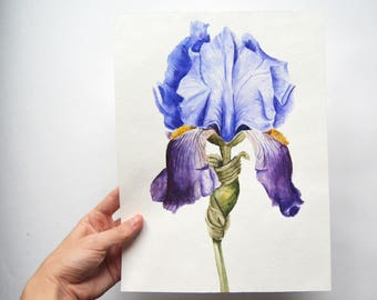 Watercolor painting| Flower painting| Original watercolor painting| Botanical illustration| Iris painting|  Floral painting| IRIS