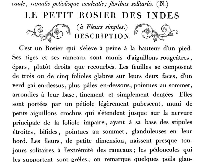 Iron Orchid Designs - Decor Transfers - Le Petit Rosier 11 x 14