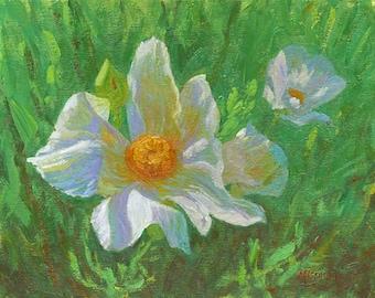 "Oil painting of Matilija Poppies, white flowers, white poppies, 11""x14"""