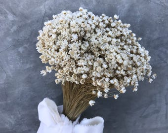 """Dried star flowers, Dried Flowers, Wedding flowers, Flower bouquets, Home decor 12"""" tall"""