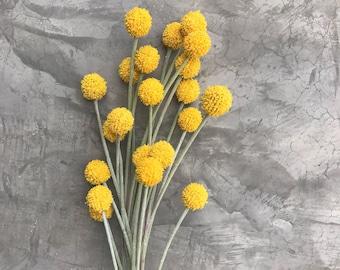 "Silk Craspedia , silk billy balls, Silk Flowers, Wedding flowers, Home decor 23 "" tall"
