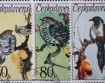 1991 Birds of the World Postage Stamp Sheets  Woodpecker Robin Thrush Passerine Owl Magpie Flycatcher Blackbird Meadowlark Hoopoe