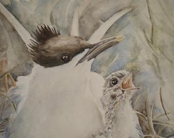 Triptych birds, watercolor, swan, tern, barnacle goose, wunderkammer