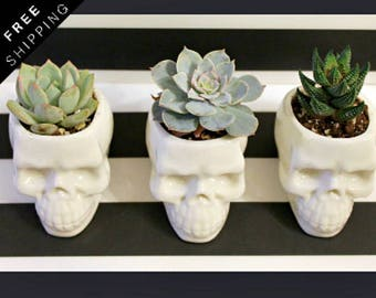 Ceramic Planter, Skull, succulent planter, succulent pots, gothic home decor, desk organizer, Skull Decor, dia de los muertos, birthday gift