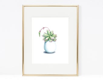 Quirky Succulent on White