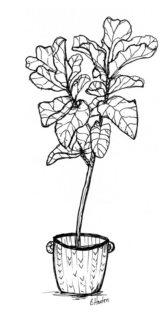 sc 1 st  Etsy & Figgy Pot Sketch Print Fig Leaf Print Fig Leaf Wall Art Fig Leaf Indoor Plants art home decor pot plant print