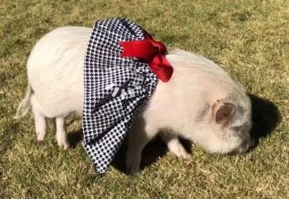 95bbdc15c4f16 Houndstooth & crimson! Pet Tutu, Mini Pig Clothes, Alabama Crimson Tide