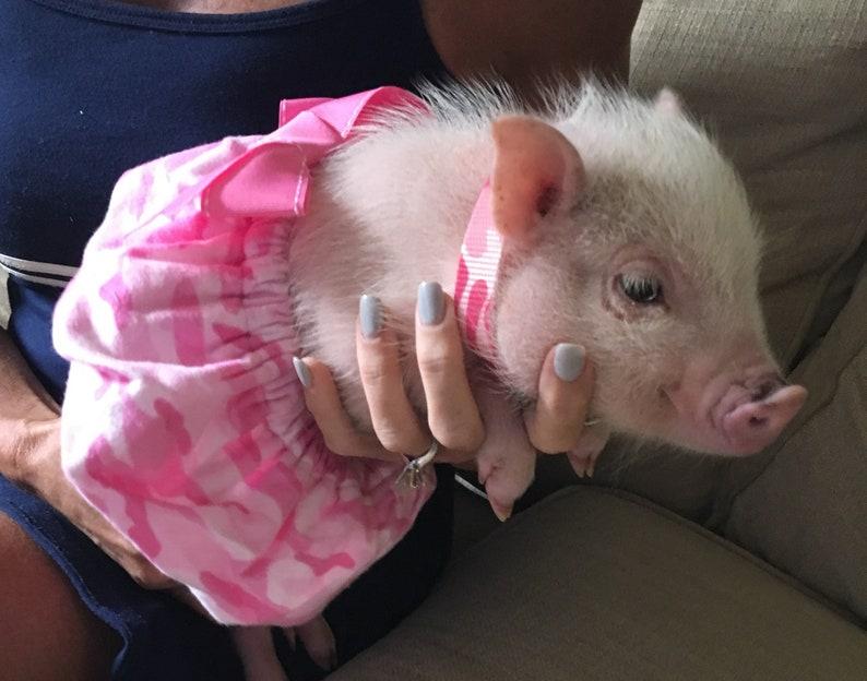 2dff7617dca2e Pink Camo! Pet Tutu, Mini Pig Clothes