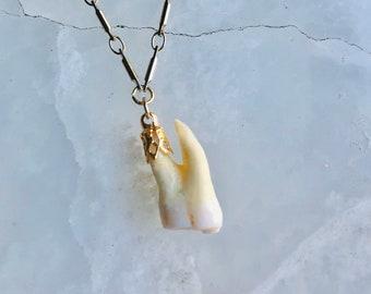 Memento Mori Molar Necklace