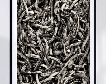 Mono Nature Photography print poster design Worms leatherjackets animal textured black and white photography mono photo wall art MONO/0001