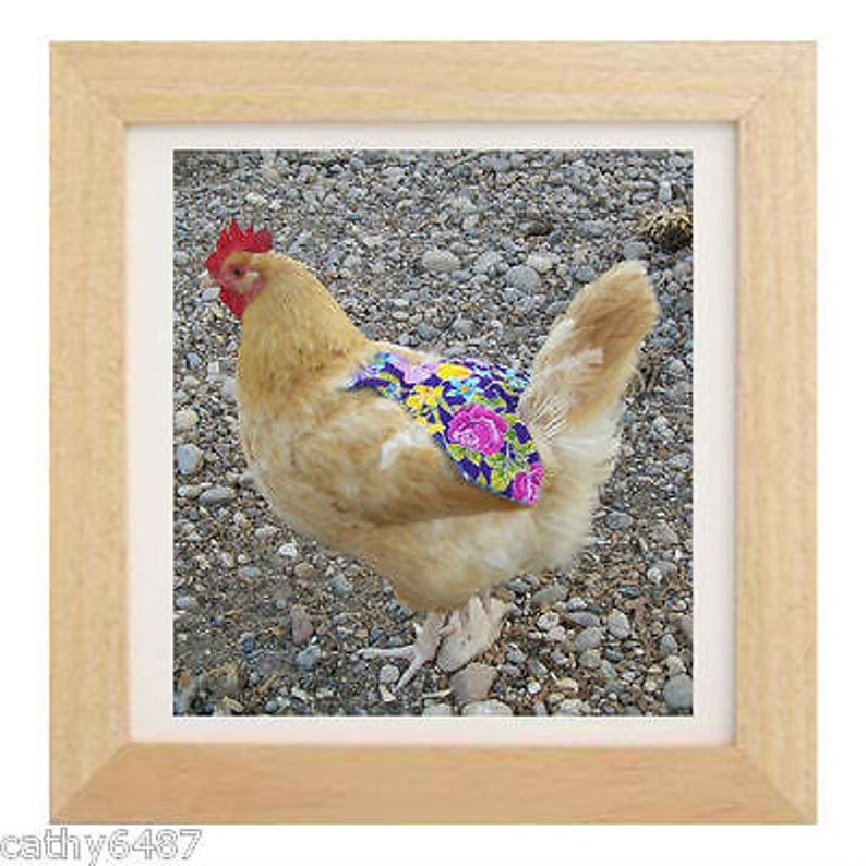 2 CHICKEN SADDLE APRONS hen feather protection from mating image 0