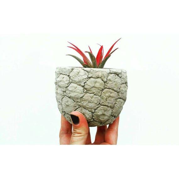 Realistic Pineapple Planter,Air Planter, Air Plant Holder, Desk Planter, Pineapple decor, Concrete Home Decor
