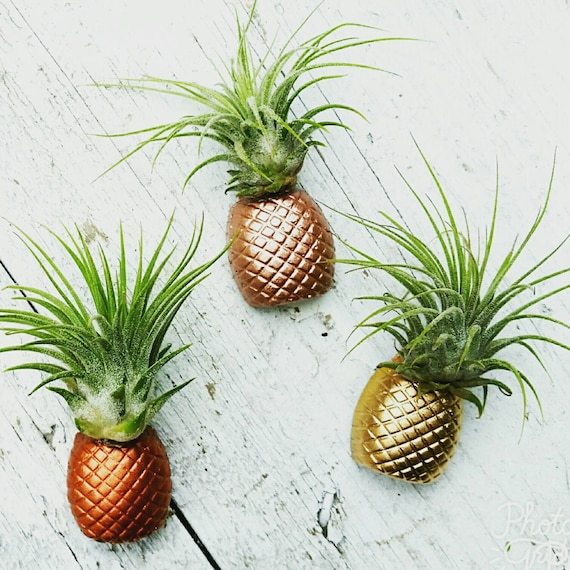 3 Pineapple Magnets/Air Plant magnet/Pineapple decor/Air Plant Holder/Air Planter/Concrete Planter/Bridesmaid Gift/Pineapple/Office Planter